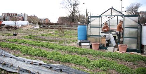 Whitelock Farm in Reservoir Hill
