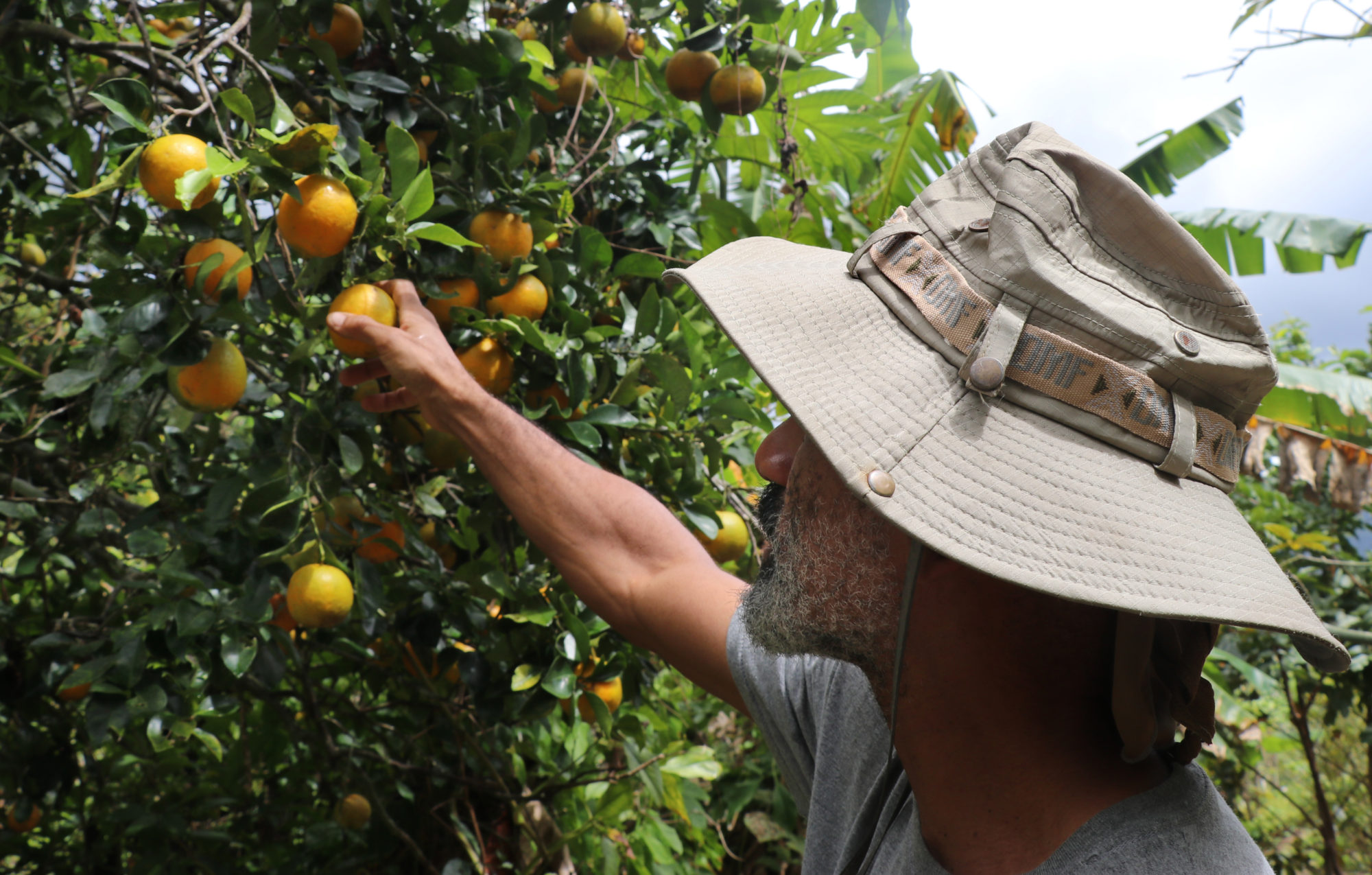 Paul Ratliff prefers working in an orchard to cubicle life. Photo by Tina Locurto
