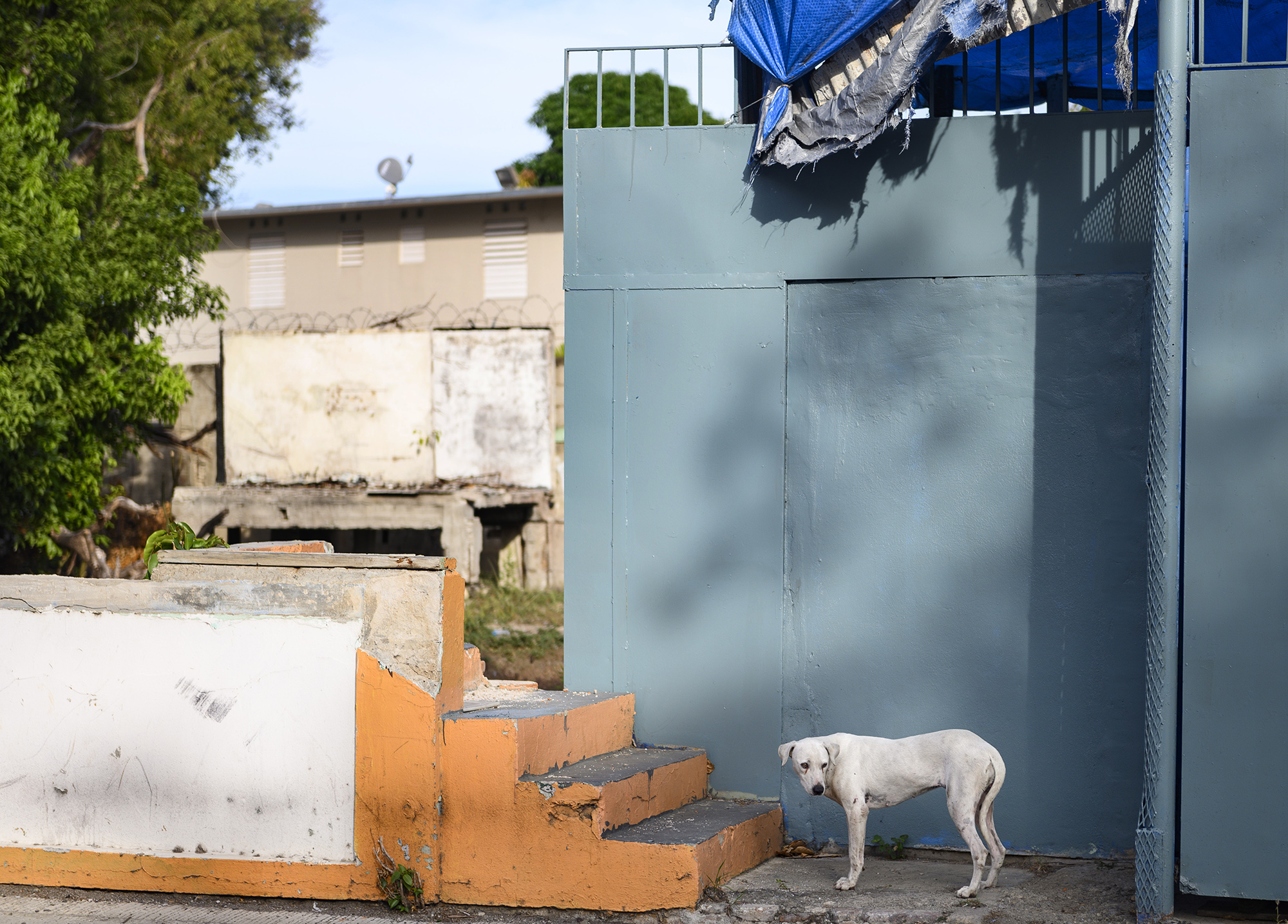 Stray dog in Ponce, Puerto Rico. Photo by Caitlin Lee