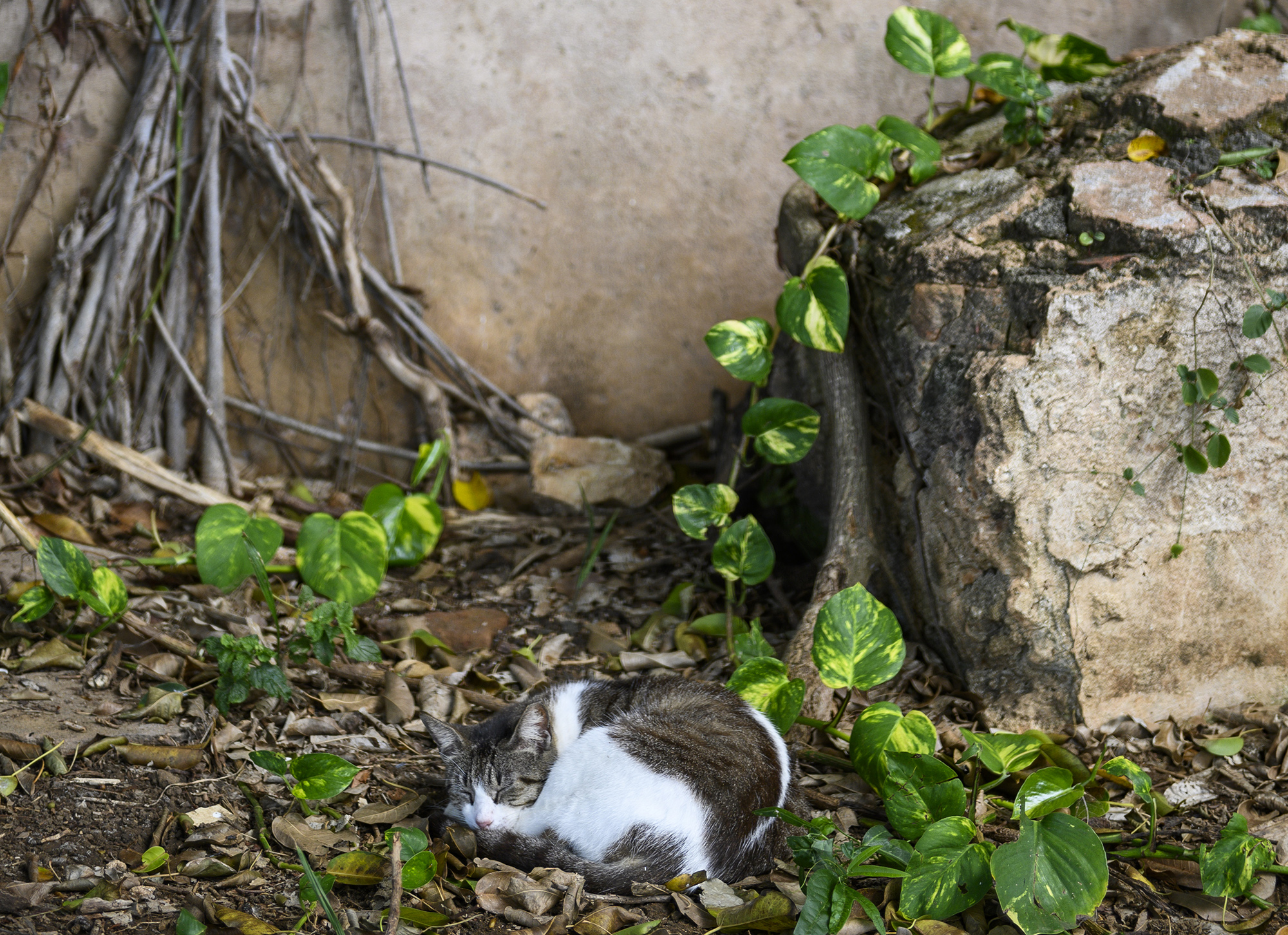A cat sleeps in a sheltered nook in Old San Juan. Photo by Caitlin Lee